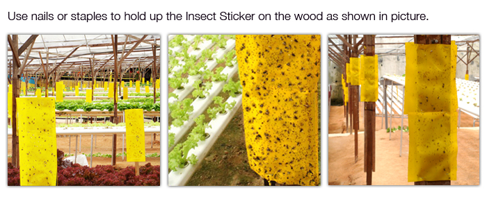 Insect Sticker Trap, farm trap, vegetable farm trap, agriculture adhesive glue